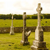 Clonmacnoise; Cows Grazing in the Distance