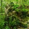 Blarney Stone Forest