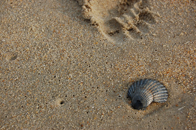 0606 Outer Banks 031