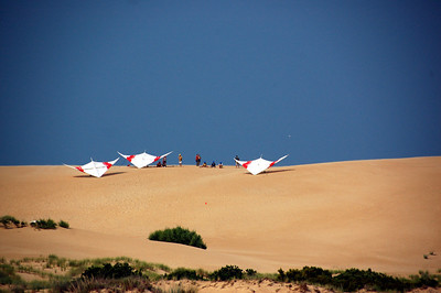 Hang Gliders on the Dune