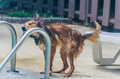 Roxy shaking dry