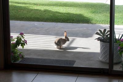 Palm Springs Living Desert Zoo April 2009
