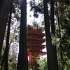 Pagoda - Japanese Tea Garden