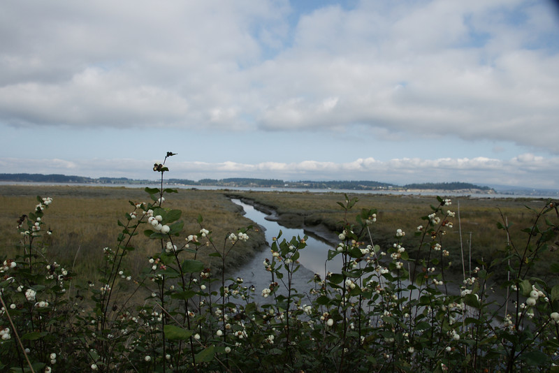 Iversons Spit Reserve on Camano Island