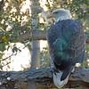 Santa Barbara Zoo CA