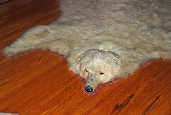 A bear rug in the Drawing Room of Craigdarroch Castle.