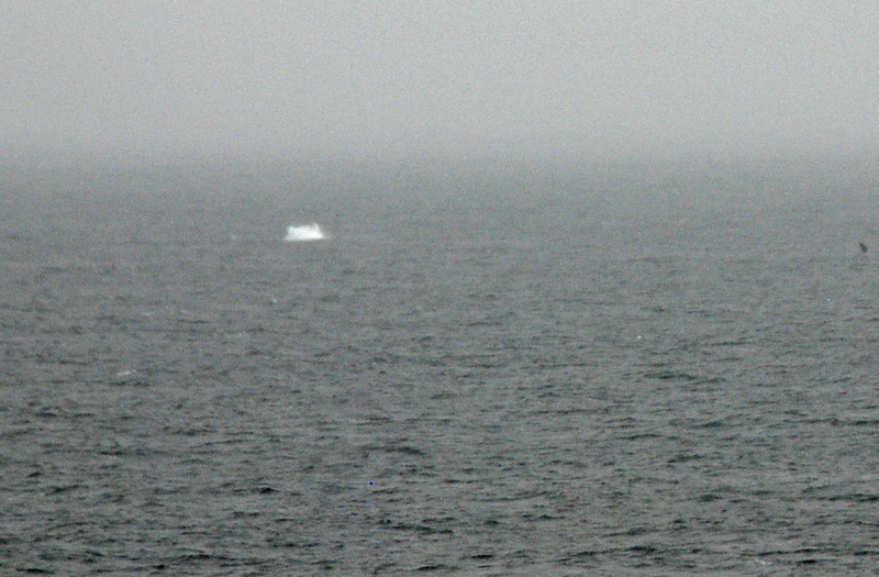 A whale spotted from the Zaandam.