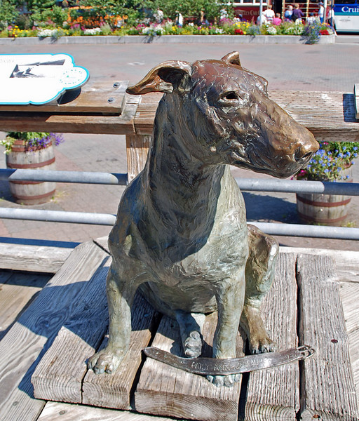 Patsy Ann, a bull terrier, greeted ships arriving in Juneau in the 1930's.  A statue at the port honors her.