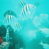 Scuba diver feeding fish.