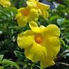 Bermuda flowers.