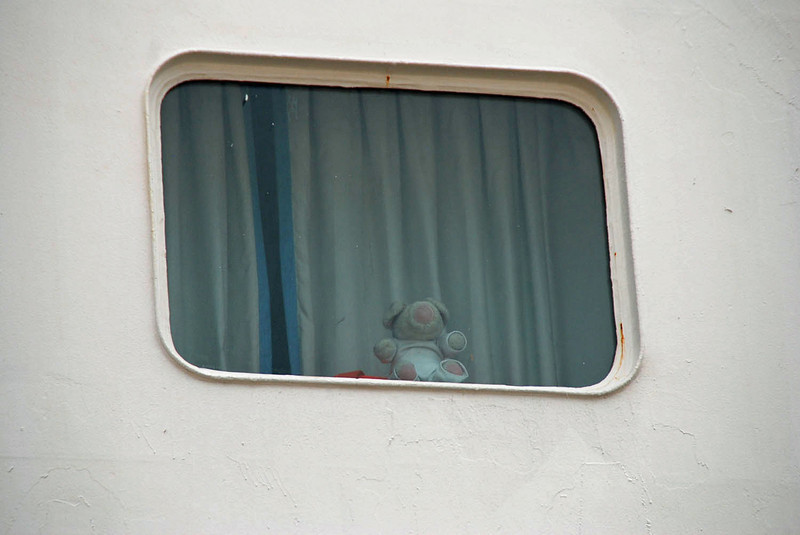 Chitlin enjoying the view from our porthole.