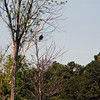 We spotted the osprey in a tree.