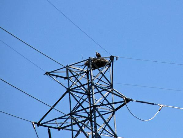 Another osprey nest.
