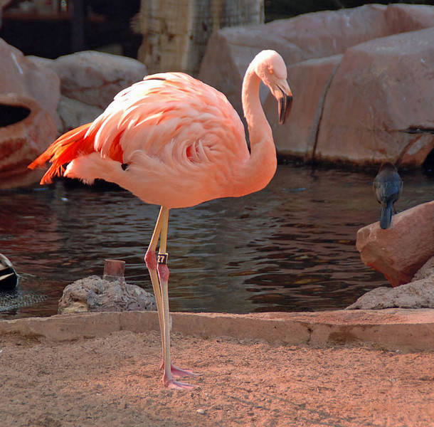 Yes, they do have live flamingos at the Flamingo Hotel.