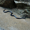 A snake on the pathway under the bridge.