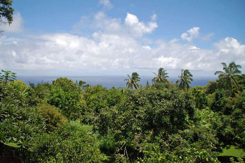View of the coast from Ono Farms.