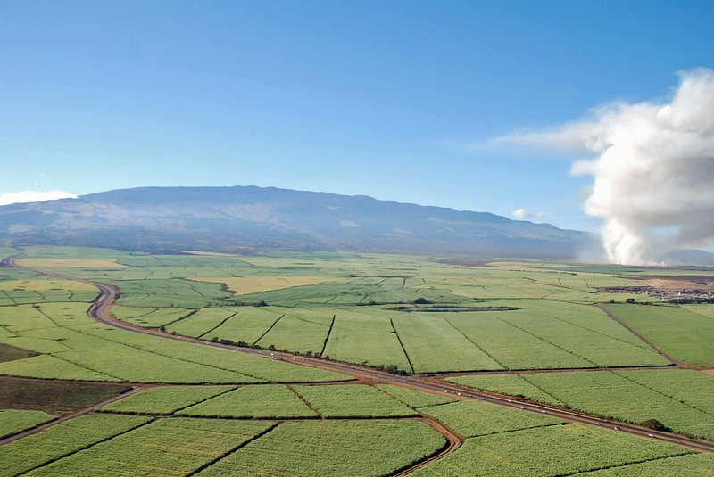 Sugarcane fields go on forever.