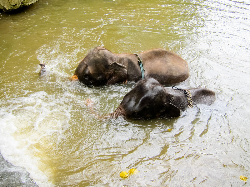 The elephants swam while we ate
