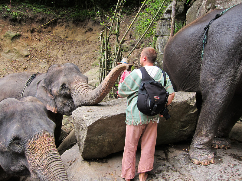 I had to seek out my elephant to give her a little snack