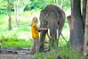 Tay nervously feeding her elephant