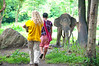 Meeting the elephant for the first time
