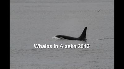 Whales in Alaska 2012-