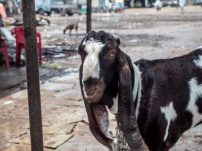 Someone's goat