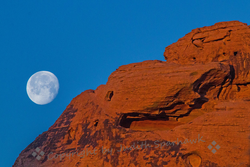 Moonset ~ This almost-full moon was setting in the early morning hours, slipping behind the red rocks of the Valley of Fire in Nevada.