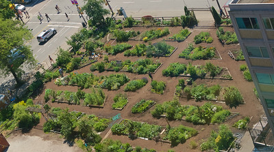 Community gardens even in middle of downtown