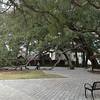 Feb. 6 - We headed south along the Atlantic coast, looking for warm weather! One stop was at St. Simon's Island where we saw this amazing live oak, in front of the library where we did some computer work. Spent the night at WM in Beaufort.