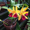 They also have an orchid house, where we got to see many unusual varieties.