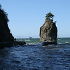 Siwash Rock, and its Douglas fir on top
