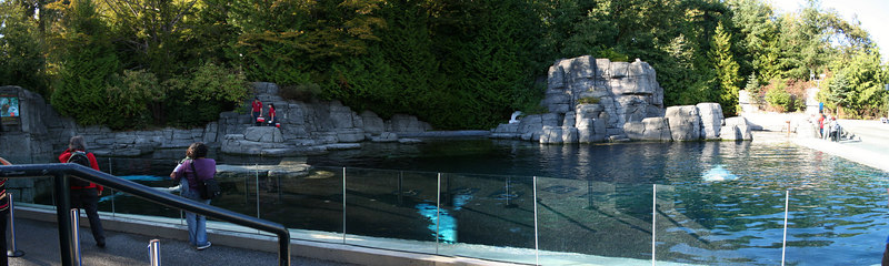 A panorama of the beluga habitat at the Vancouver Aquarium.