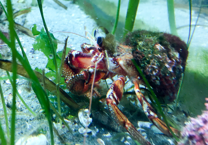 I watched this crab hang out for a while...he was cool!