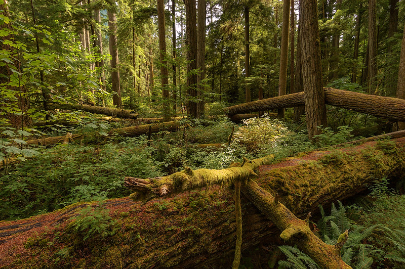 0830 Cathedral Grove