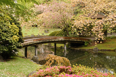 Nitobe Memorial Garden, May 2008