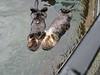 Süsses Otterpaar