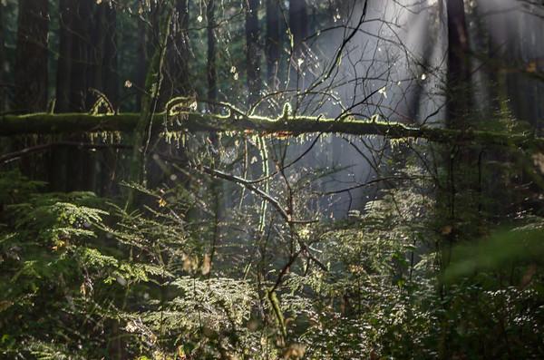 Light pops through on Baden Powell Trail