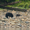Black Bear Mother & cub seen during bear watching trip in Tofino. Great experience except my camera died afterwards.