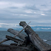 Driftwood with Olympic Mountains, Washington State, in background