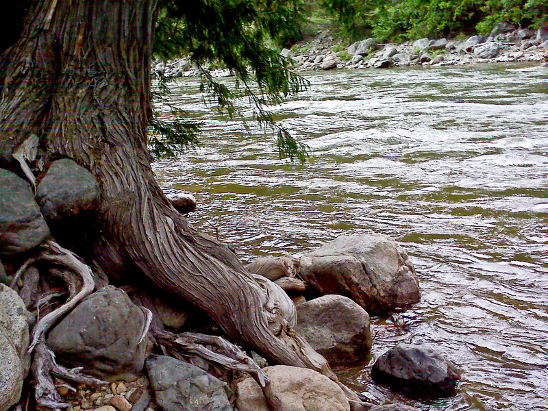 A tree living barely on the edge of the stream