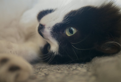 Lili, Ratter Extraordinaire