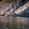 Harbor seal sunbathing