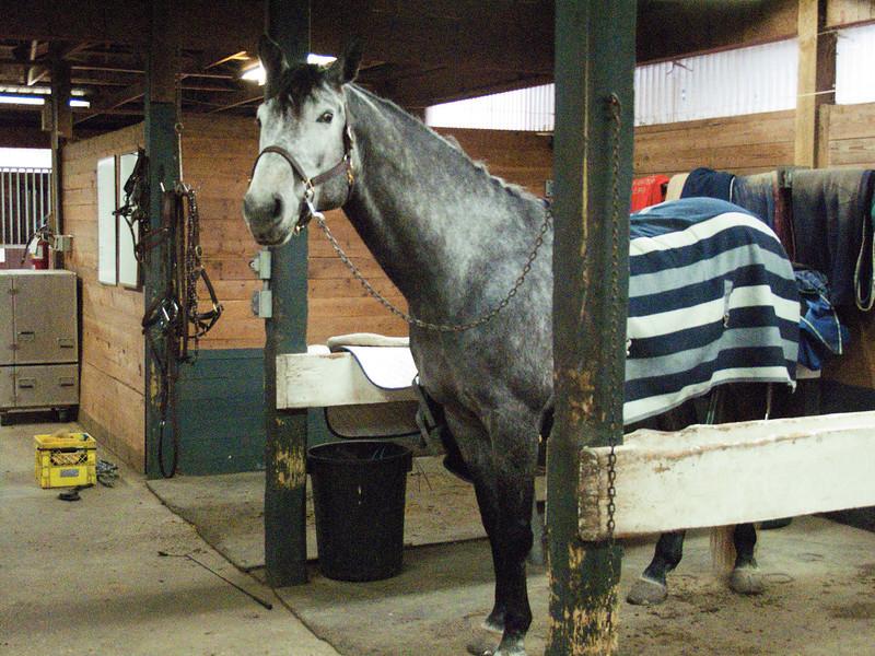 Emma's horse, Collin