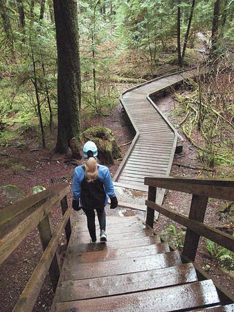Calla on rainy trail