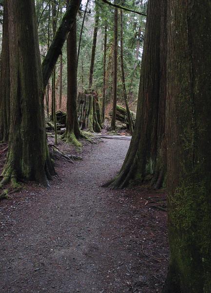 Hiking trail near Calla's door