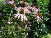 1 flowerspink
