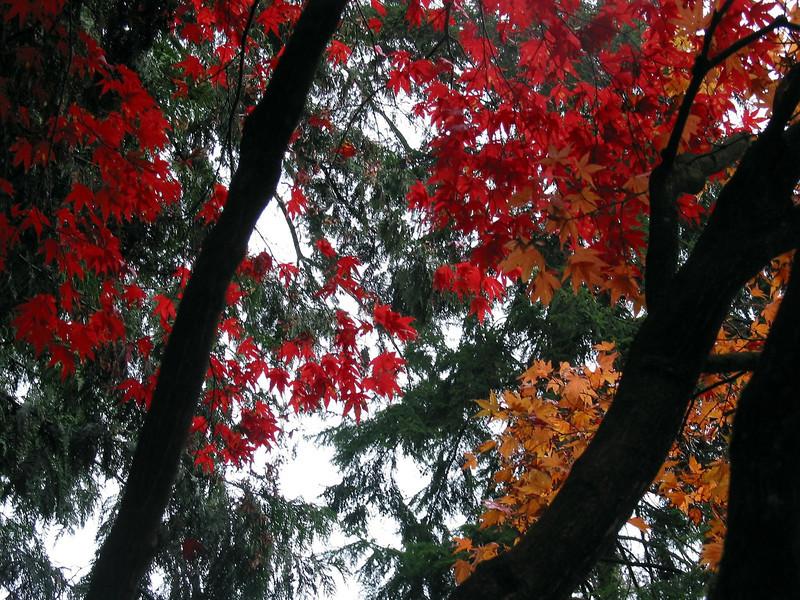 Coloured Trees