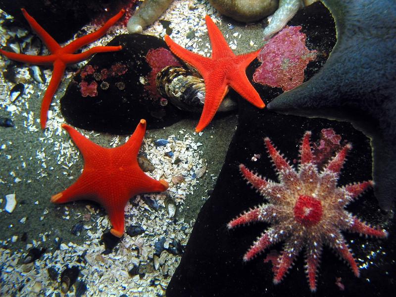 Starfishes, Aquarium
