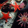 Starfishes, Aquarium